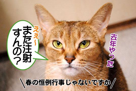 20110323_01.jpg