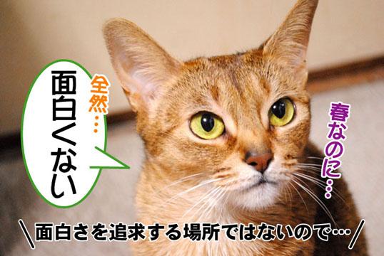 20110323_02.jpg