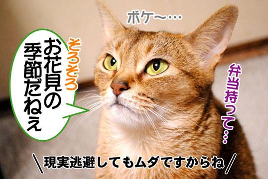 20110323_03.jpg