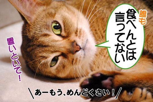 20110324_03.jpg