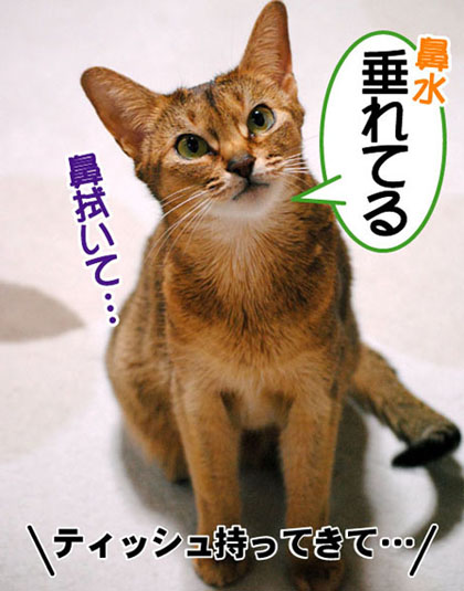 20110325_01.jpg