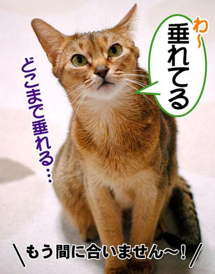 20110325_02.jpg