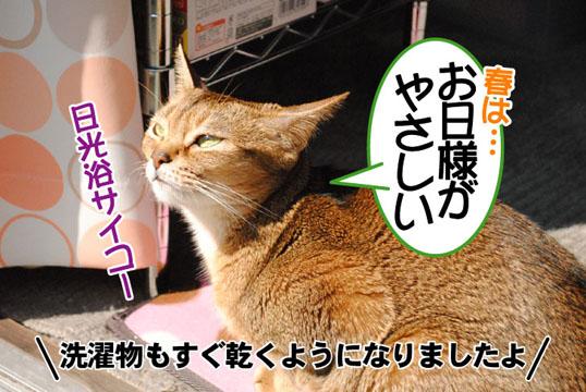 20110328_01.jpg