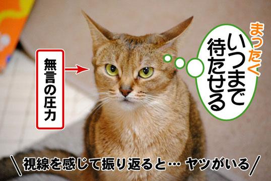 20110329_01.jpg