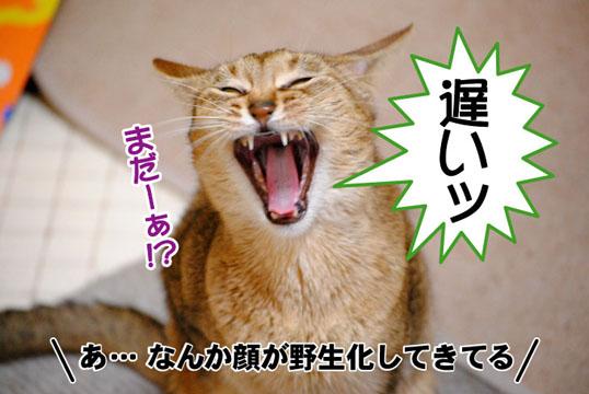 20110329_02.jpg
