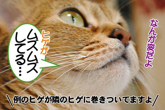 20110402_01.jpg