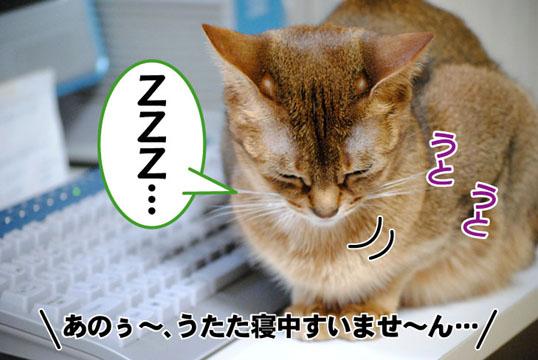 20110405_01.jpg