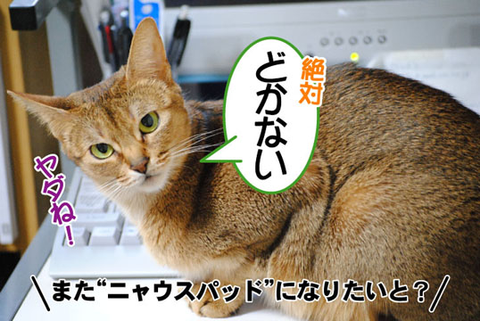 20110405_04.jpg