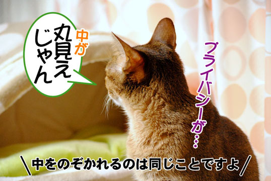 20110407_02.jpg
