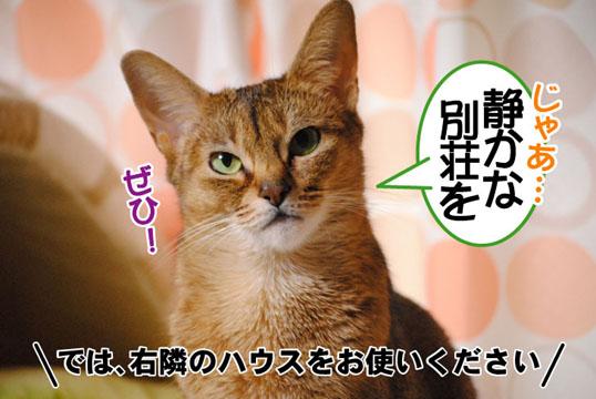 20110407_05.jpg