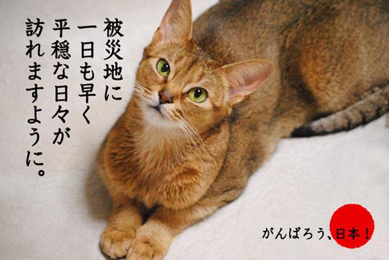 20110412_01.jpg