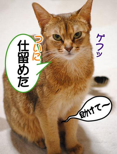 20110419_03.jpg