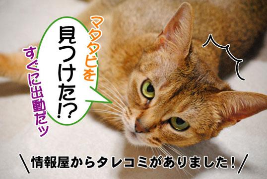 20110422_01.jpg