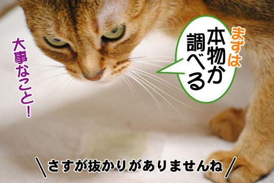 20110422_03.jpg