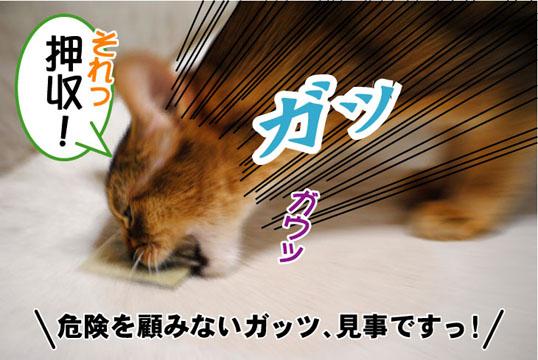20110422_05.jpg