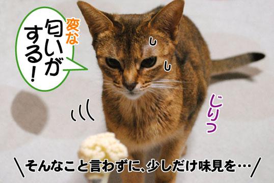 20110425_03.jpg