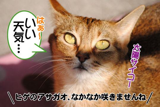 20110429_01.jpg