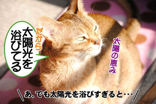 20110429_02.jpg