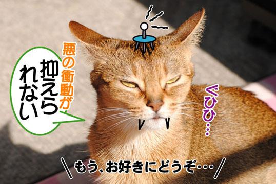 20110429_04.jpg