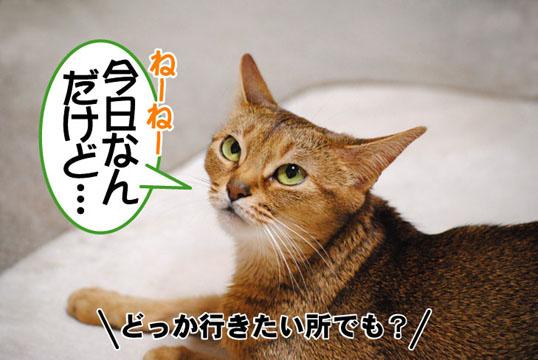 20110501_01.jpg