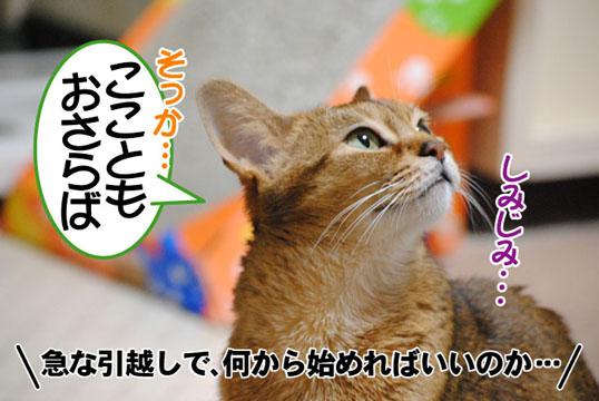 20110504_02.jpg