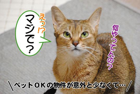 20110504_04.jpg