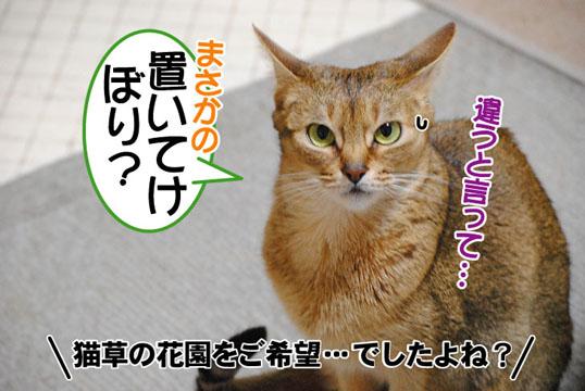 20110504_05.jpg