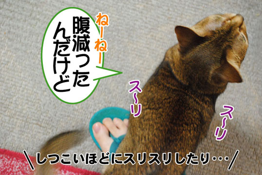 20110506_01.jpg
