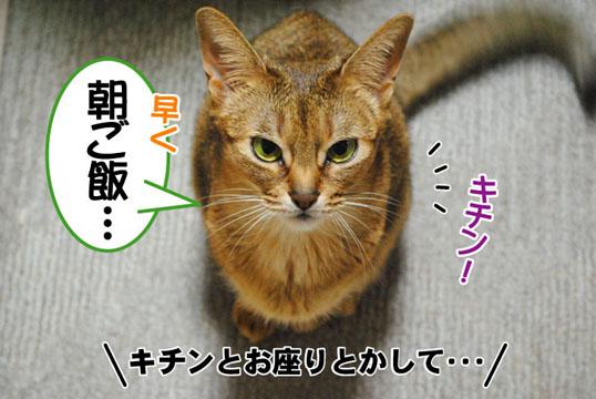 20110506_02.jpg
