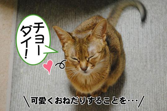20110506_03.jpg