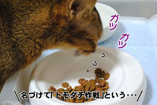 20110506_04.jpg