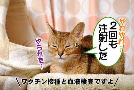 20110511_01.jpg