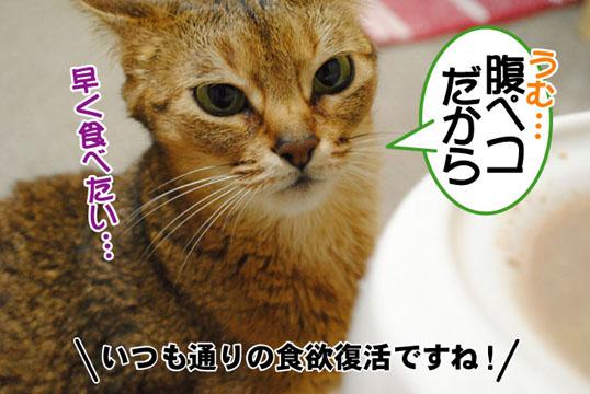 20110512_02.jpg