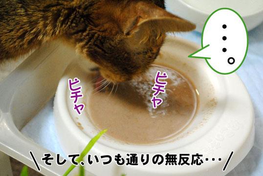 20110512_03.jpg