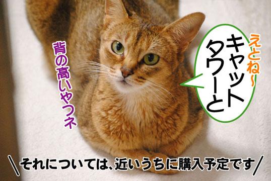 20110516_02.jpg