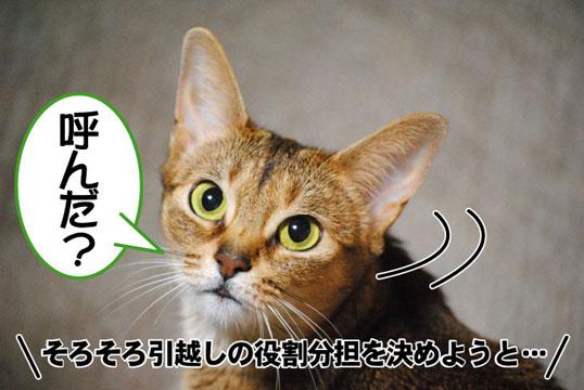 20110518_01.jpg