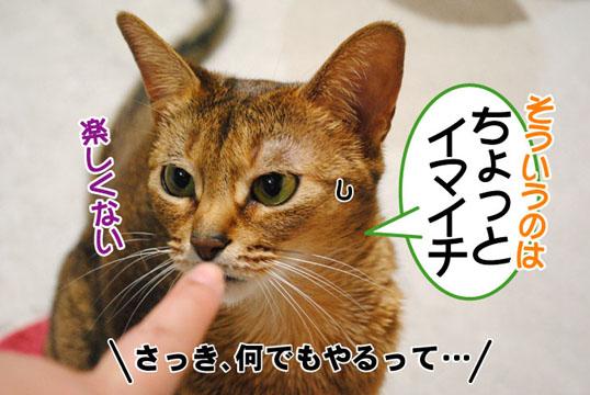 20110518_03.jpg