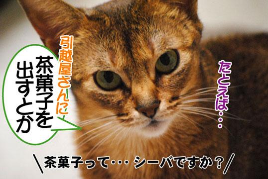 20110518_04.jpg