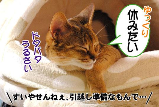 20110523_01.jpg