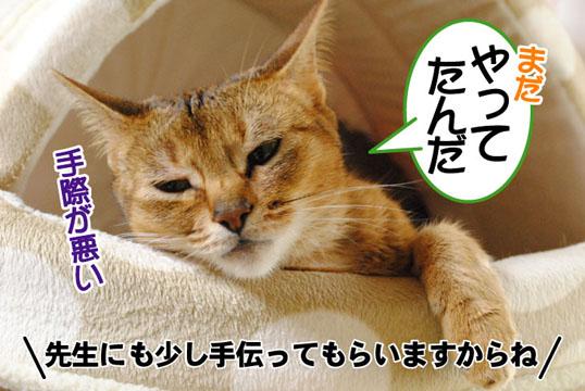 20110523_02.jpg