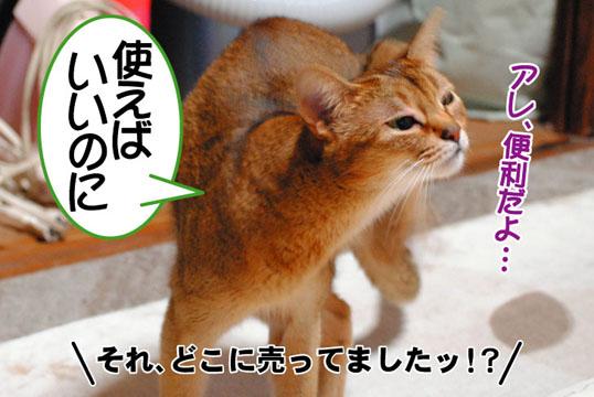 20110523_05.jpg