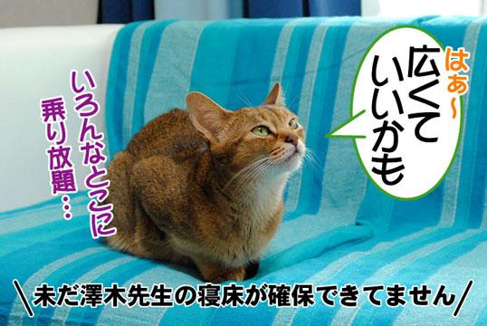 20110602_03.jpg