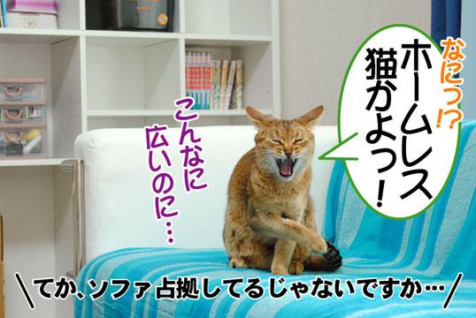 20110602_04.jpg