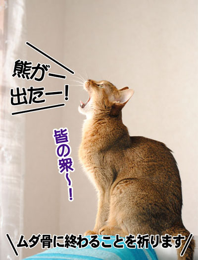 20110604_02.jpg