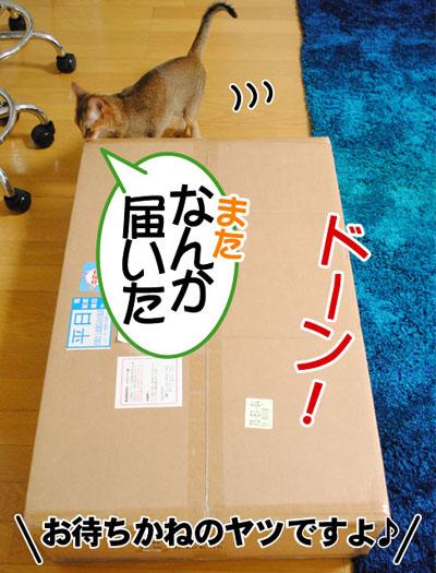 20110608_01.jpg