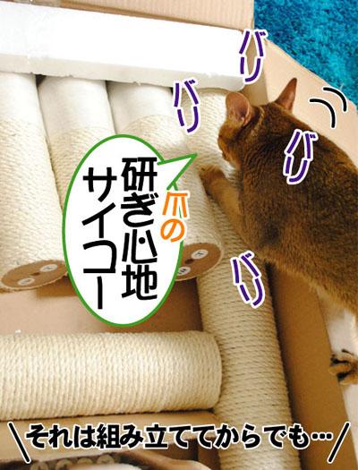20110608_03.jpg