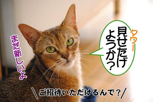 20110611_01.jpg