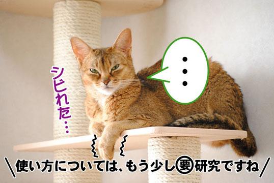 20110611_05.jpg