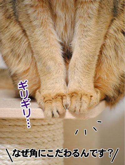 20110619_02.jpg