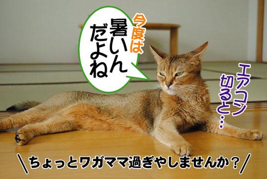 20110624_02.jpg